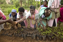 TIST Reforestation Project