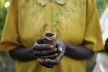 Plant as many trees as you'd like as a donation